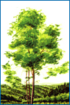 Click here for more information about JNF Trees for Israel Certificate